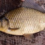 20150613_Fishing_Virlia_018.jpg
