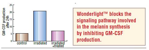 [Wonderlight%2525204]