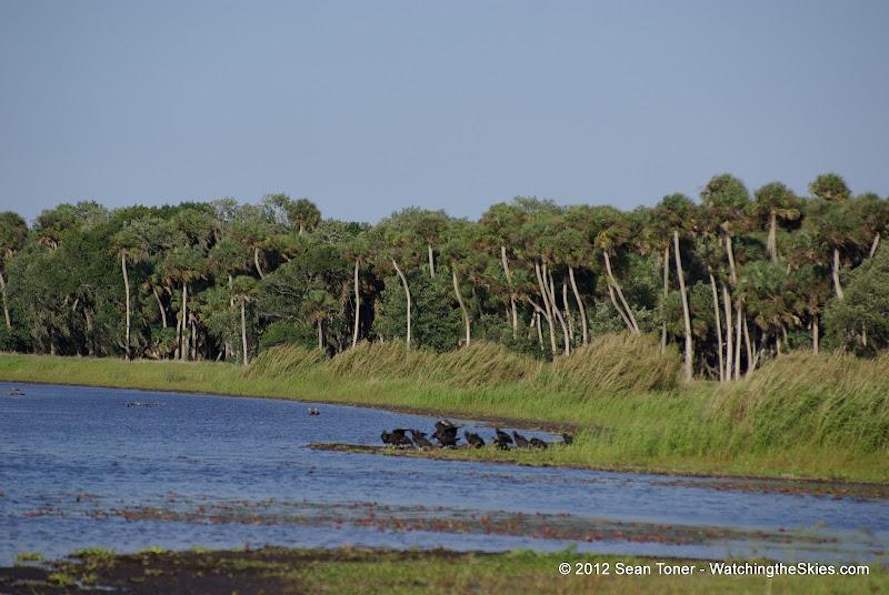 04-06-12 Myaka River State Park - IMGP4464.JPG