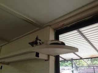 ケンカばかりの猫同士がとっても仲良くなる!すごい対策方法5