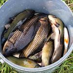 20140510_Fishing_Stara_Moshchanytsia_026.jpg
