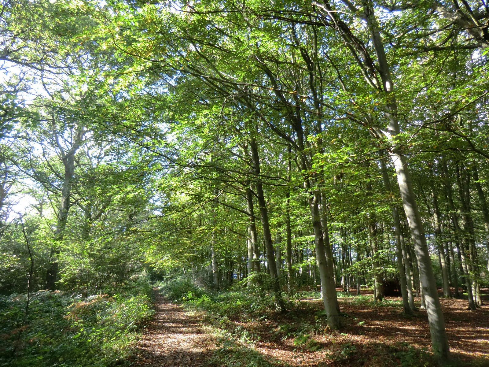 CIMG4425 Standgrove Wood