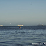 01-02-14 Western Caribbean Cruise - Day 5 - Belize - IMGP1032.JPG