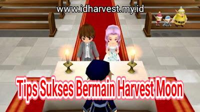 Saat bermain Harvest Moon seri apapun niscaya pemain pemula kebingungan untuk melaksanakan apa 7 Tips Sukses Bermain Harvest Moon