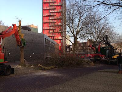 Bomenkap P-Heidelberglaan