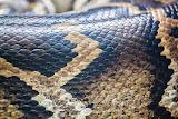 Skin of a snake (© 2014 Bernd Neeser)