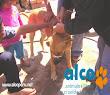 2da asistencia a Pisco por terremoto 2007 (21)