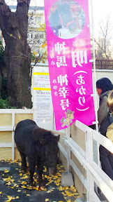 Yep, Kanda Myojin has it's own lil horse!