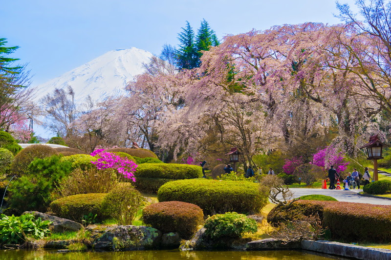 富士ビューホテル 桜 写真20