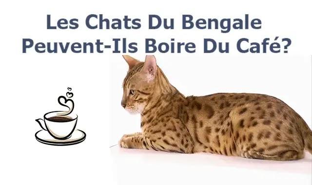 Les Chats Du Bengale Peuvent-Ils Boire Du Café?