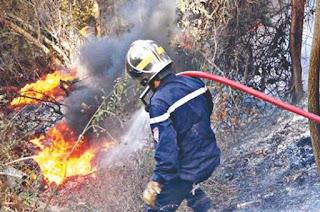 Deux feux détruisent 12 ha de forêts à Tissemsilt (protection civile)