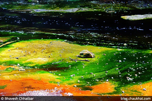 Colors of the bacteria living in the Waimangu Stream [Frying Pan Lake overflow stream] at Waimangu Volcanic Valley in New Zealand
