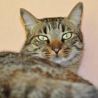 gatti 2012/4