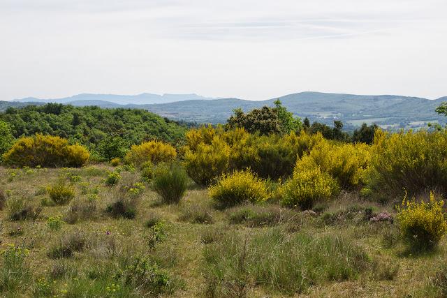 Plateau de Coupon (511 m), Viens (Vaucluse), 8 mai 2014. Photo : J.-M. Gayman