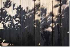 Crescent Shadows-2