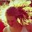 Stina Eng's profile photo