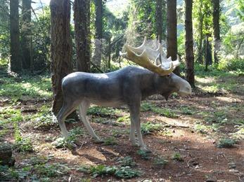 2018.06.30-056 éland dans la forêt d'Elfik