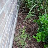 Gardening 2010 - 101_1776.JPG