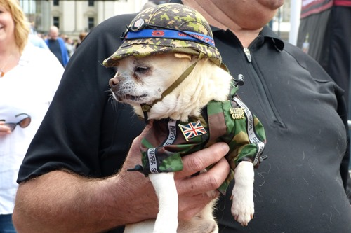 Dog at Armed Forces Day