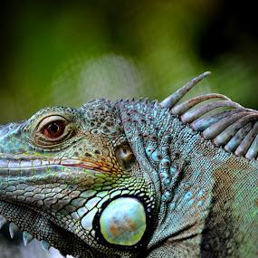 by Sankar GM - Animals Reptiles