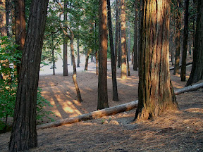 Banks of the Merced River