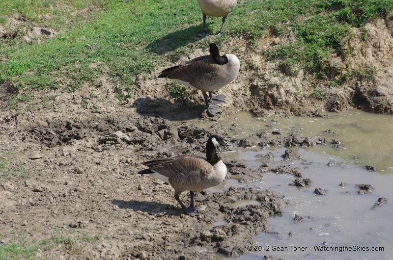 05-11-12 Wildlife Prairie State Park IL - IMGP1562.JPG