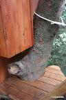こちらも階段上で振り返ると木にまとわりつくように小屋が・・・・(ロープは手すりの一部)