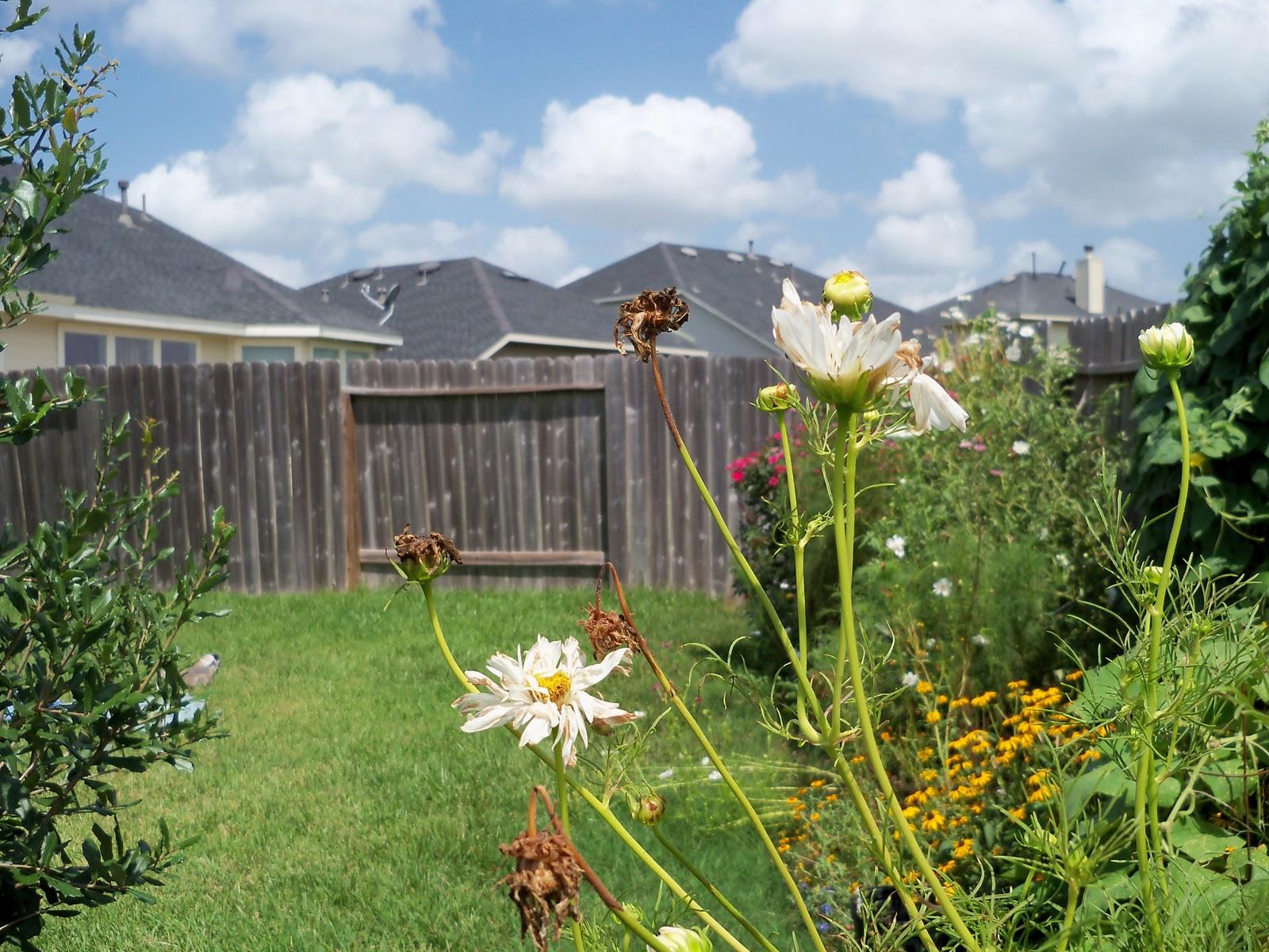 Gardening 2010, Part Three - 101_5104.JPG