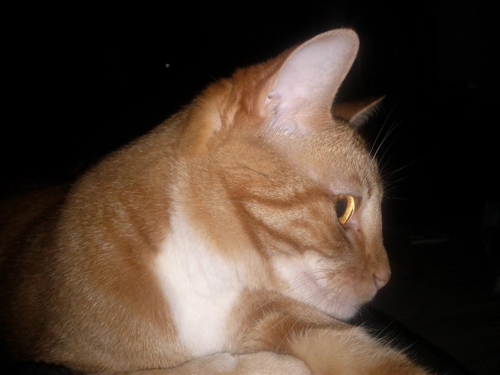 Kitteh - IMG_20110412_181508.jpg