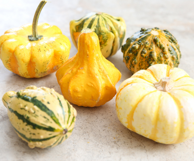 photo of Decorative Gourds