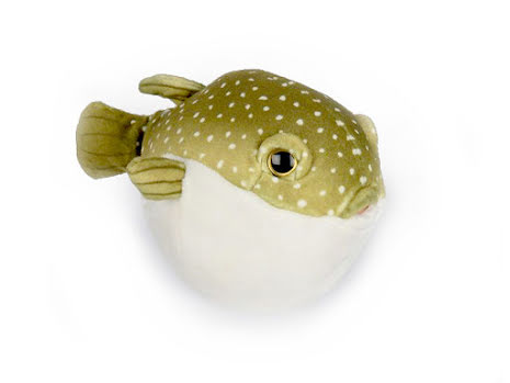 Stuffed puffer fish