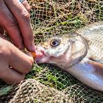 20140624_Fishing_BasivKut_022.jpg