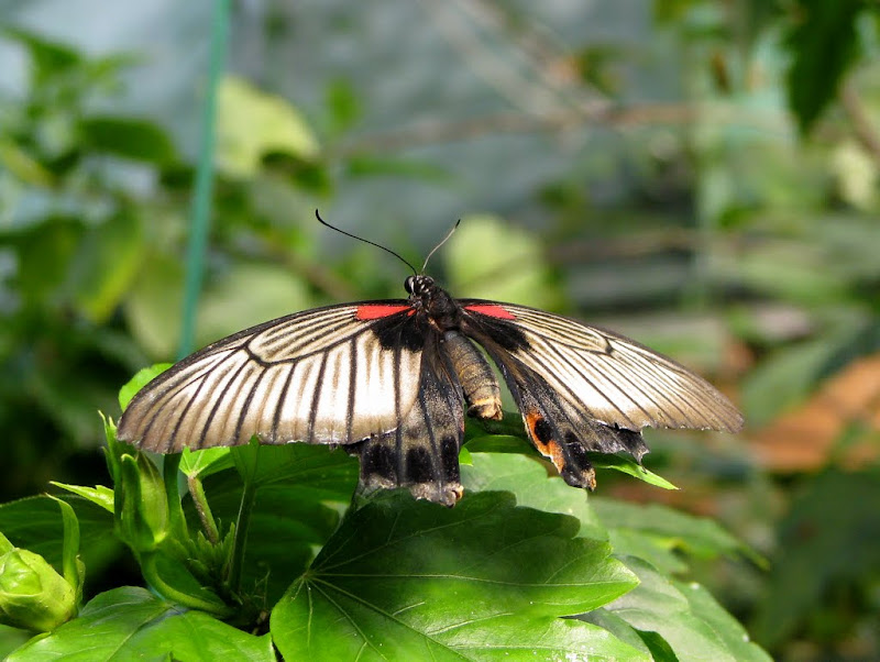 IMG_2652 - edinburgh butterfly farm