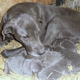 Sofia & her babies @ 1 week
