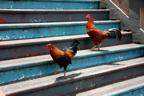 La vita è come la scala delle galline... di daviderm