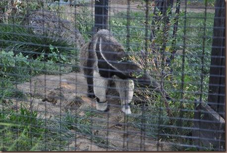 08-17-16 Boise Zoo 15