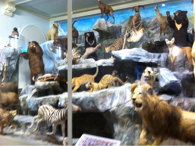 Musée d'histoire naturelle de Lille
