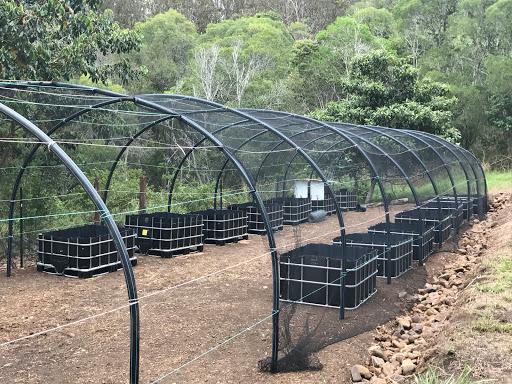 greenhouse-2017-01-8-06-53.JPG