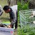Pelepasliaran Hewan Endemik dan Dilindungi di Taman Nasional Gunung Halimun Salak