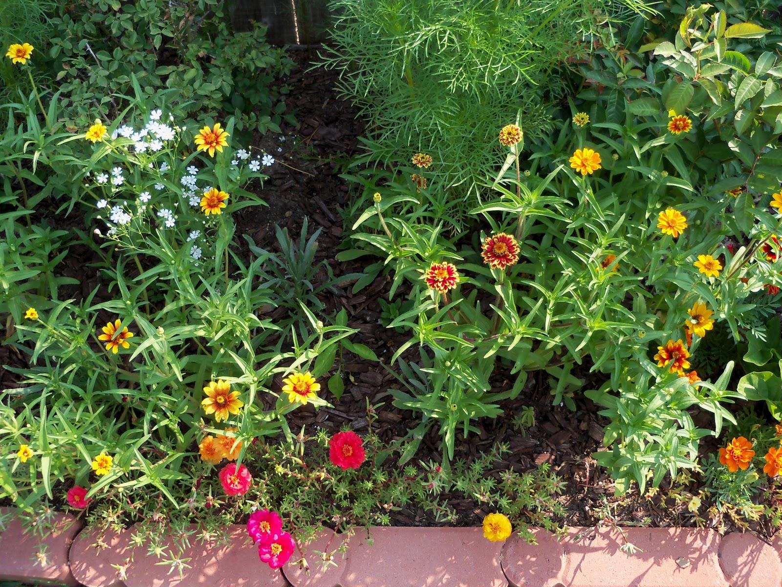 Gardening 2010, Part Two - 101_3023.JPG