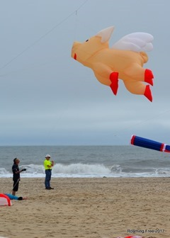 It's a flying pig!