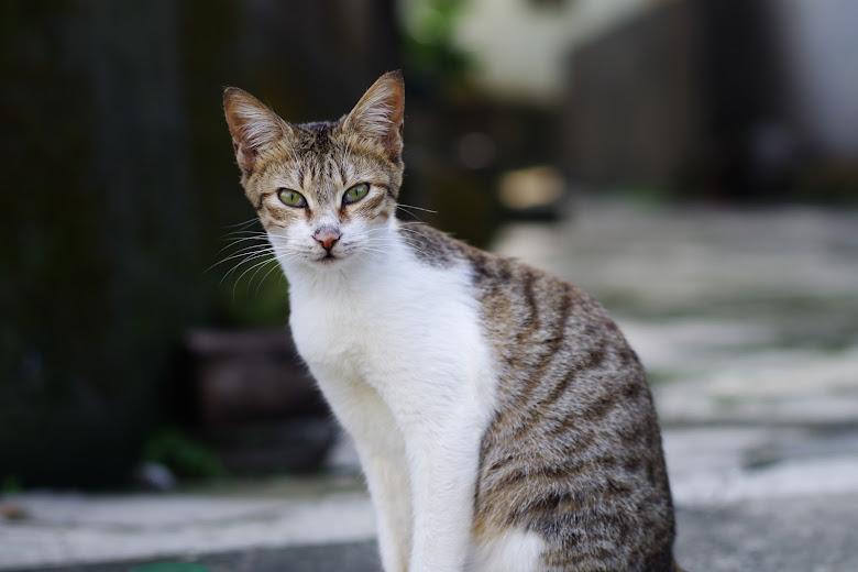 金山貓蹤3