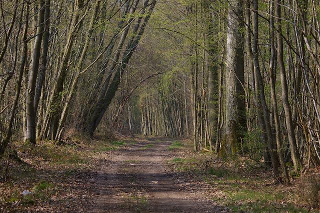La forêt au printemps. Hautes-Lisières (Rouvres, 28), 28 mars 2011. Photo : J.-M. Gayman