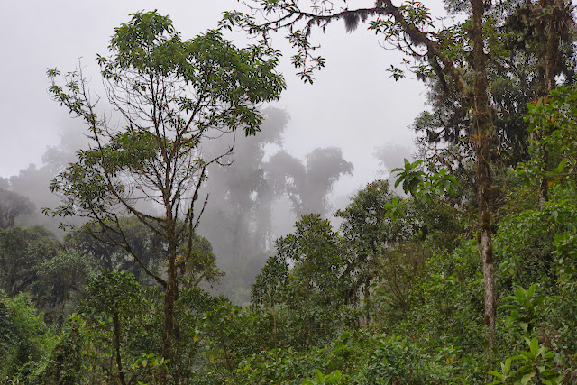 Route de Cuicocha à Apuela, 2500 m (Imbabura), 17 novembre 2013. Photo : J.-M. Gayman