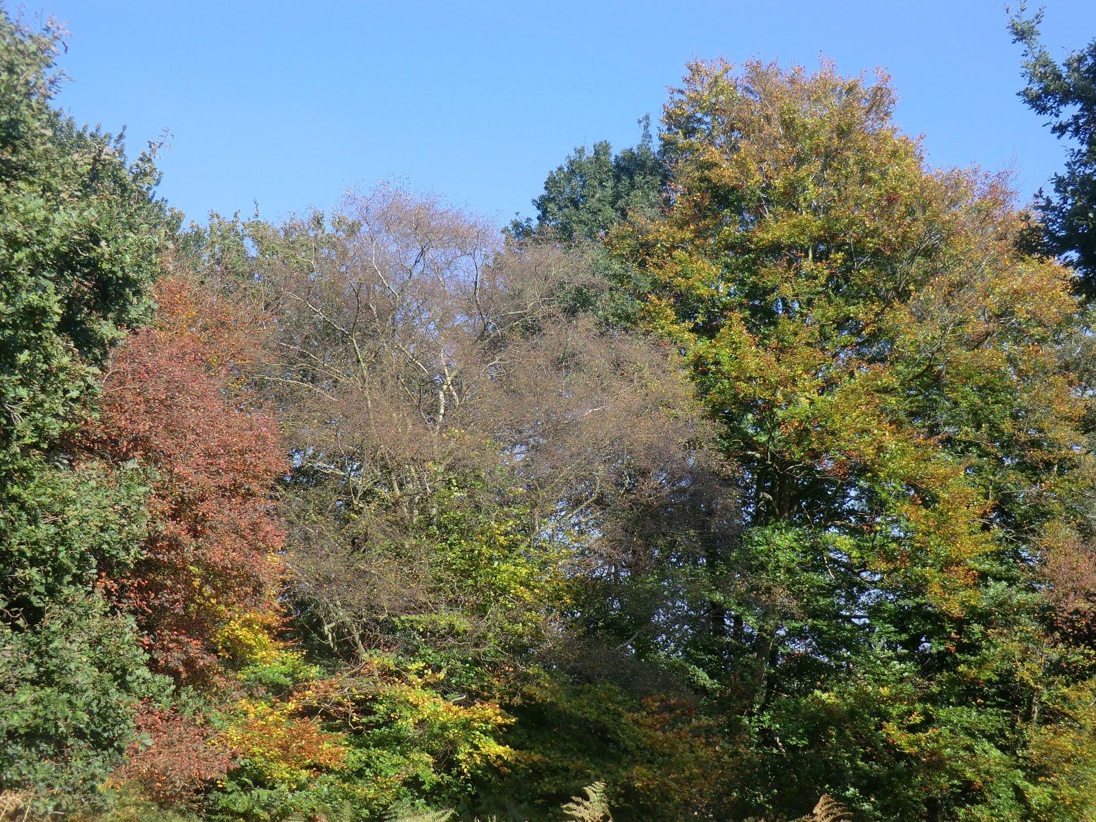 CIMG0844 Autumn colours on Ashdown Forest