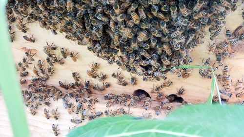 Bees on Hive