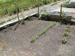 Pflanzen in Reih und Glied