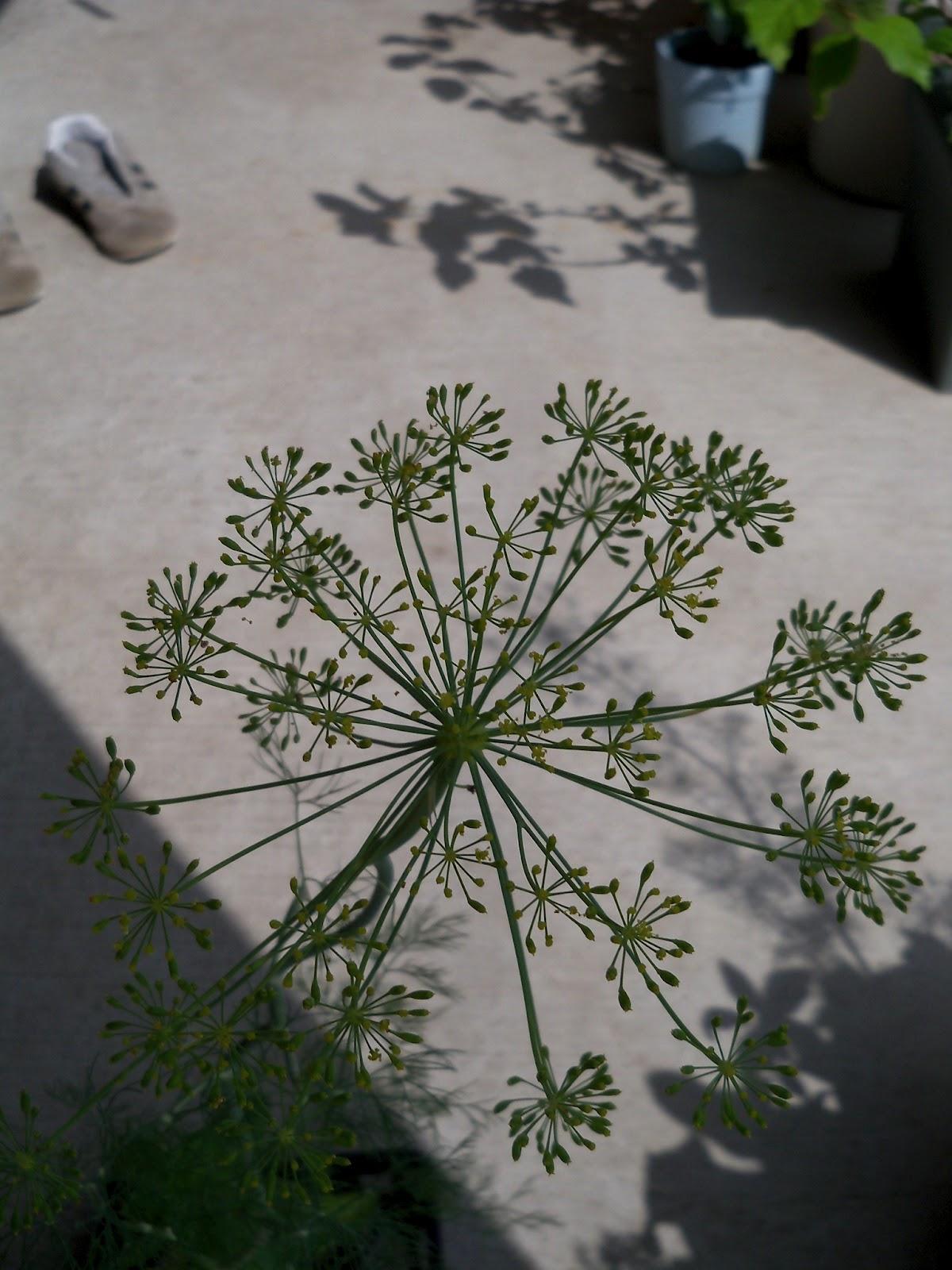 Gardening 2011 - 100_0161.JPG