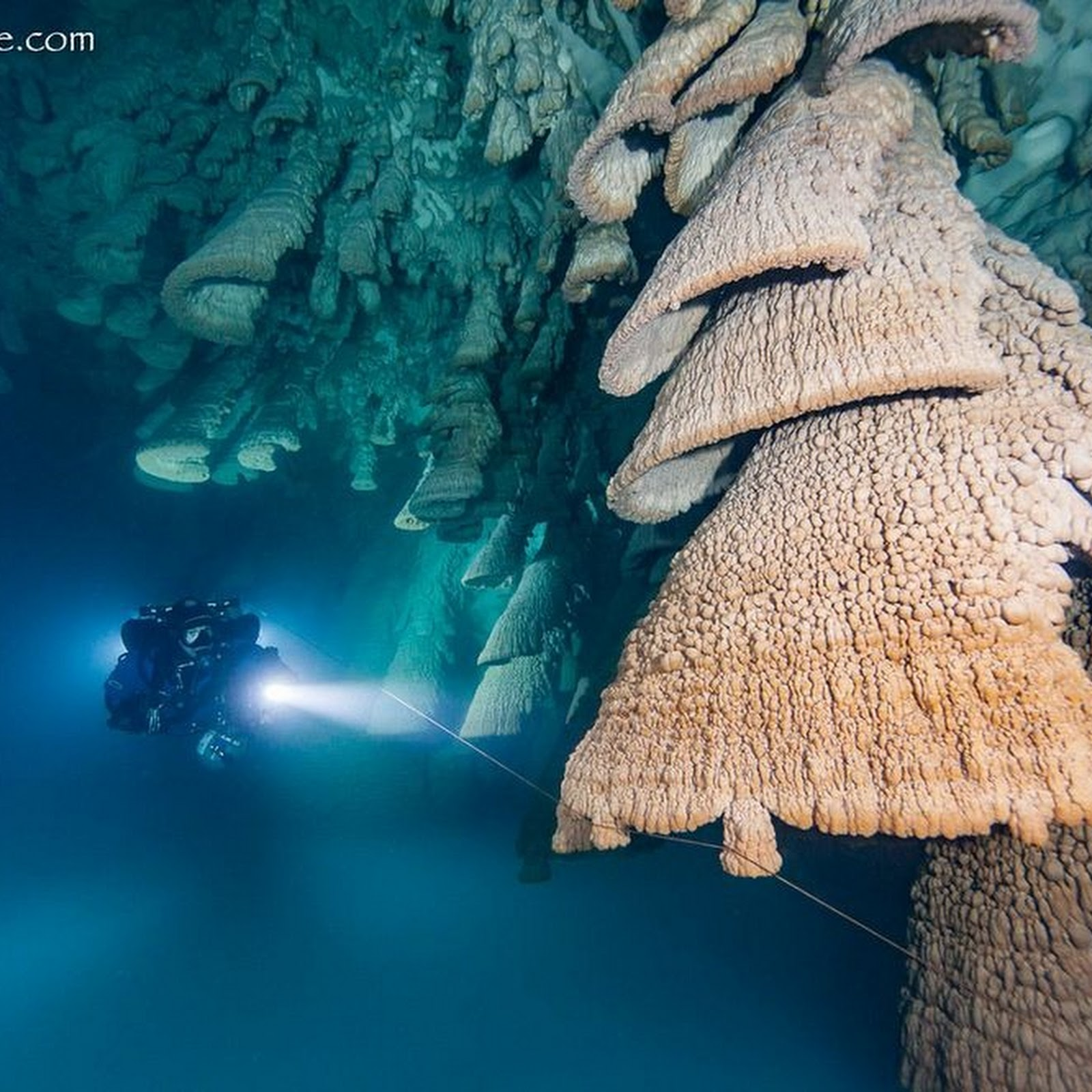 The Hell's Bells of Cenote Zapote