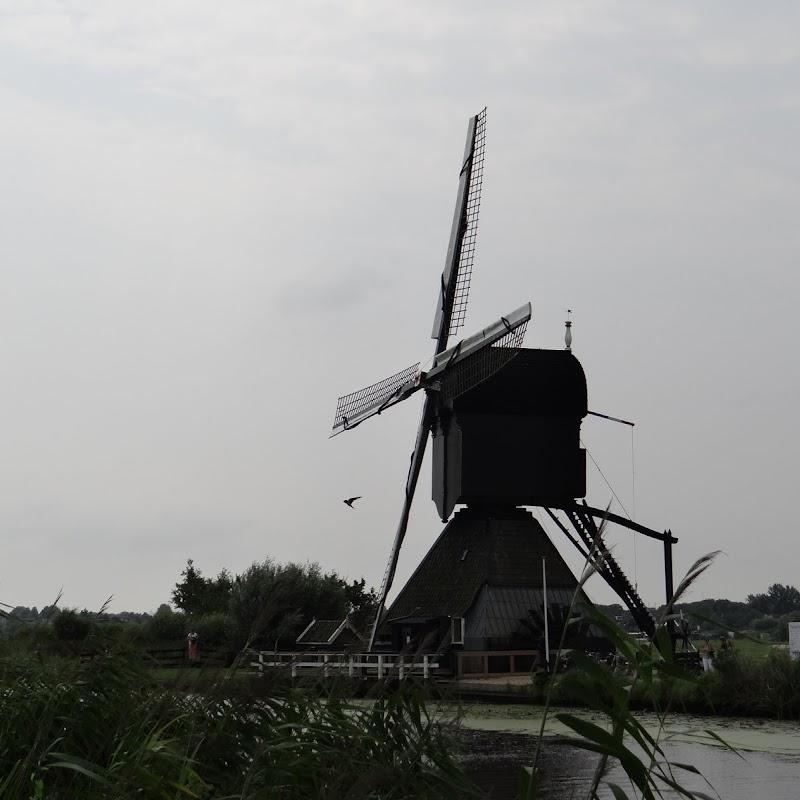 Day_6_Kinderdijk_31.JPG
